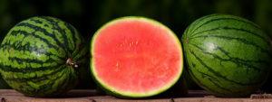 தர்பூசணி (Watermelon)