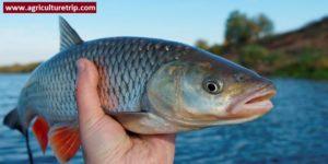 கால்நடை பராமரிப்பு – மீன் வளர்ப்பு முறை