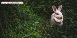 கால்நடை பராமரிப்பு – முயல் வளர்ப்பு முறை