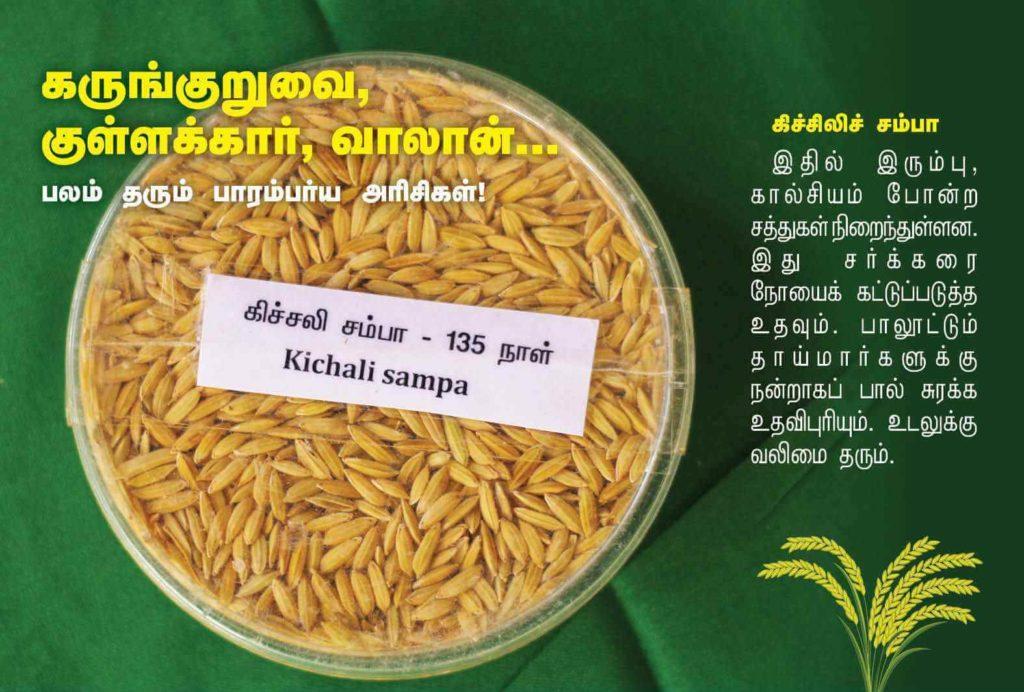 கிச்சலி சம்பா நெல்