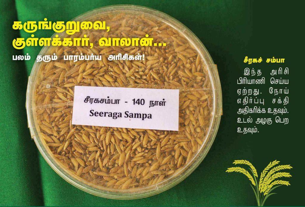 சீரகச்சம்பா நெல்