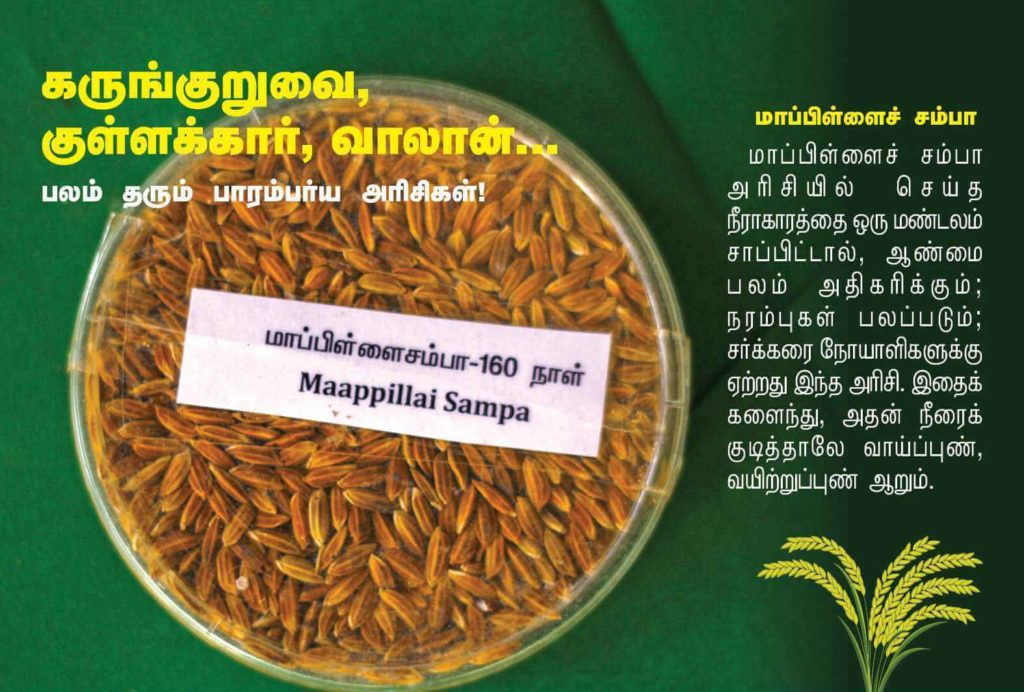 மாப்பிள்ளை சம்பா நெல்
