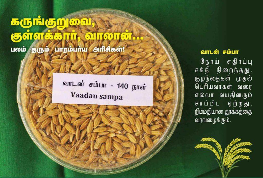 வாடன் சம்பா நெல்